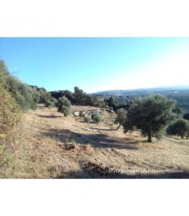 Большой земельный участок в Ретимно